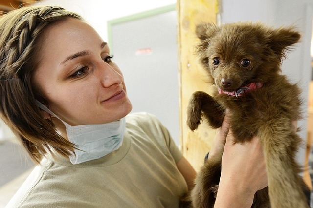 puppy, vet, veterinarian