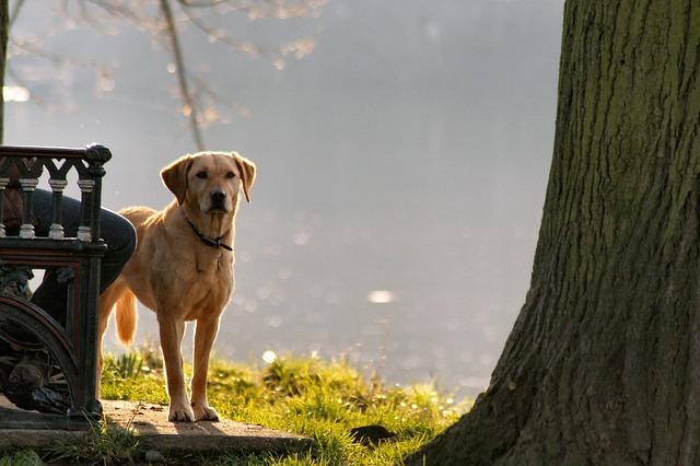 dog, river, park