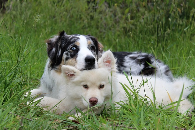 dogs, puppy, cute