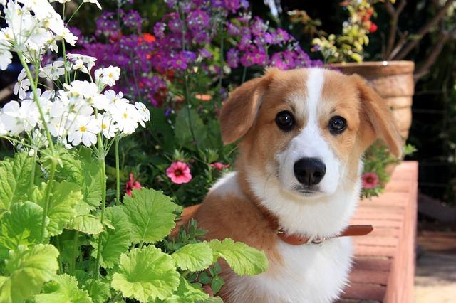 dog, puppy, flowers